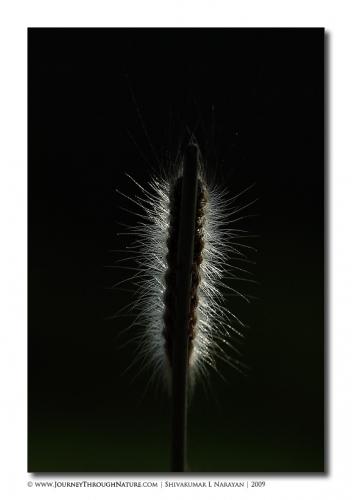 enlightened caterpillar