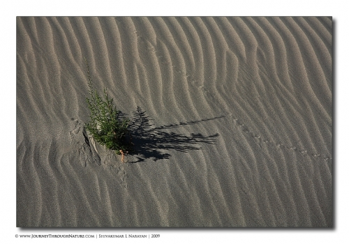 lifeindesert landscape ladakh