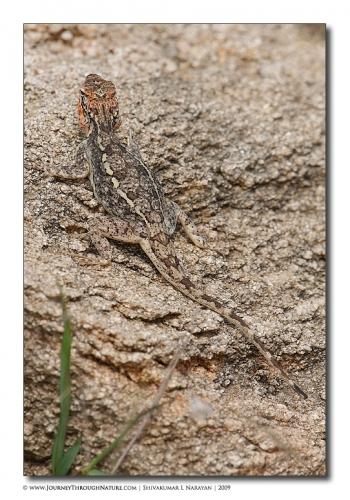 lizard camoflage mg 9991