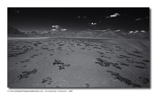 mooreplains landscape ladakh
