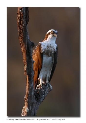 osprey kabini02