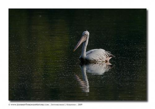 pelican hebbal 01
