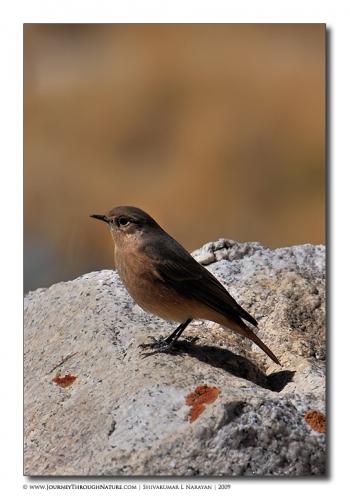 unid bird ladakh